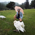 【別府】志高湖(しだかこ)で白鳥と戯れる!アヒルと白鳥の違い