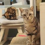 ウドムスックの猫カフェ『Cat Cafe by Dome』行き方・ルール解説