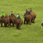 朝の作業中に象が目の前をシラ~っと横切る @カンチャナブリー