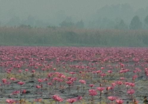 lotus_zoom1.png