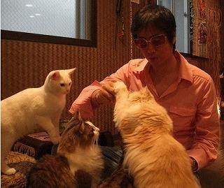 tawamure_cats.jpg
