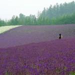 【ふらの】念願だった富良野ラベンダー畑へ!『北の国から2015』