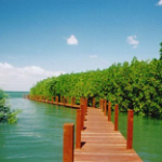 ジャンタブリー(チャンタブリー)観光でマングローブ自然教育センター