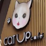 【注意】BTSサラデーン駅(MRTシーロム)の猫カフェ『Cat Up Cafe』行き方と営業時間