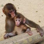 高崎山自然動物園の猿『そだね』割引料金・所要時間・駐車場について in 大分